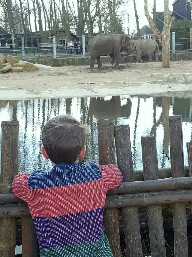 watching the elephants at Twycross zoo