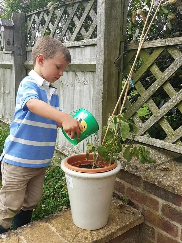 watering runner beans