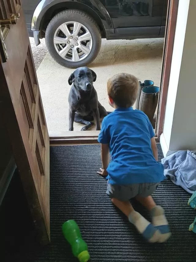 face off between boy and black labrador