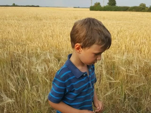 waiting for the combine harvester