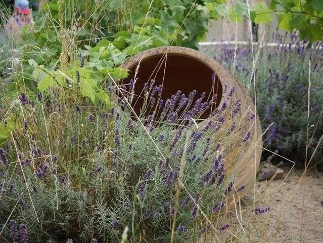 garden-lavendar