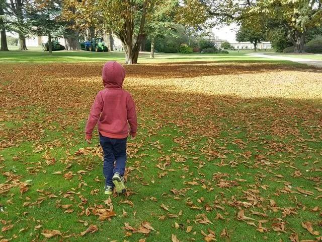 autumn colours on a walk at blenheim