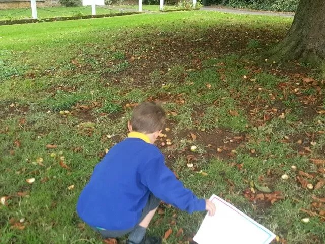 conker collecting after school