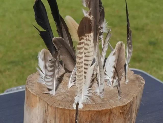 falconry-feathers-at-tamba-park
