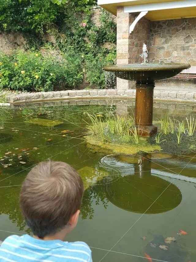 watching-goldfish-in-the-pond