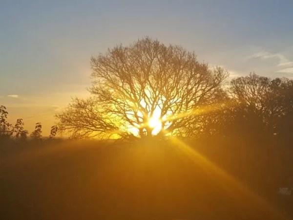 Sunday photo sunrise in trees