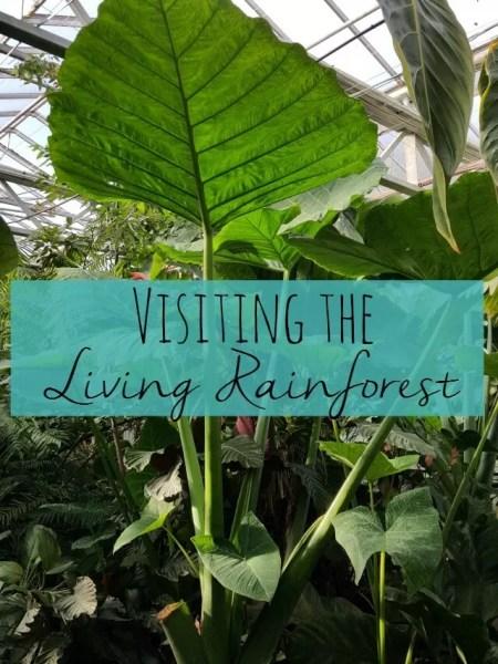 visiting-the-living-rainforest-bubbablueandme
