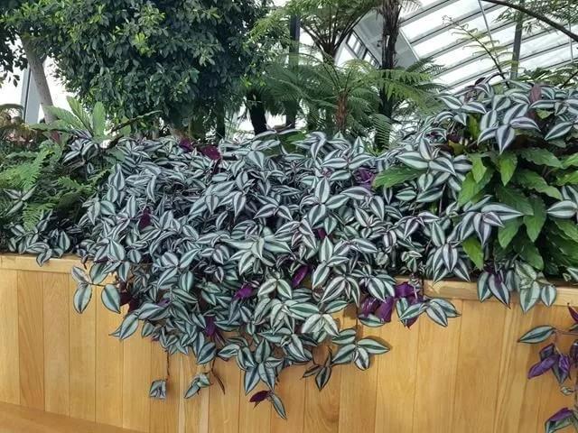 sky-garden-plants