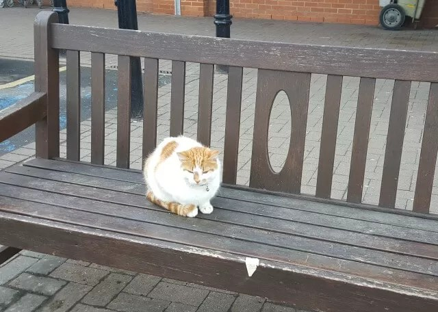 cat on the supermarket bench