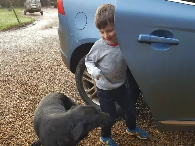 dog and boy getting in the car