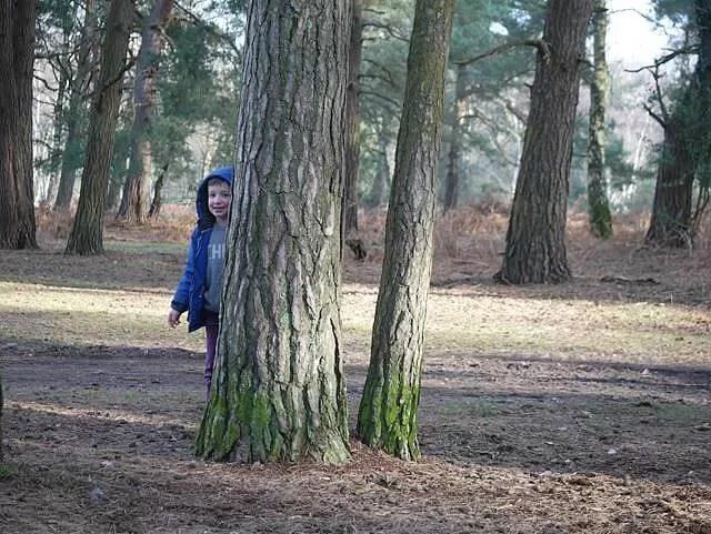 hiding behind trees