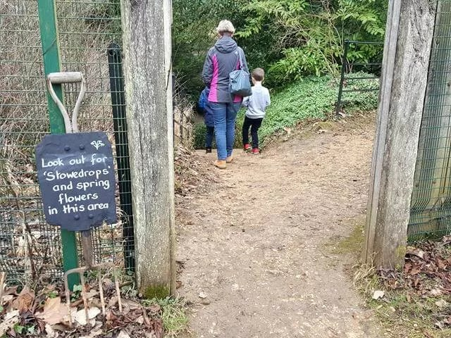 into the snowdrops area
