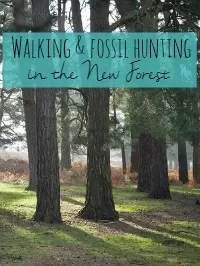 fossil hunting in new forest
