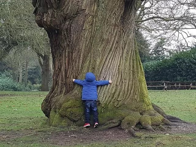 hugging treest at mottisfont