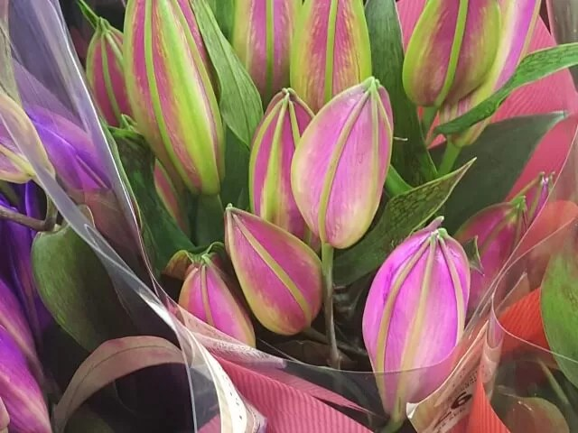 pink and green lilies