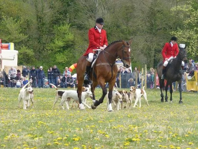 the hunt at lambourn open day