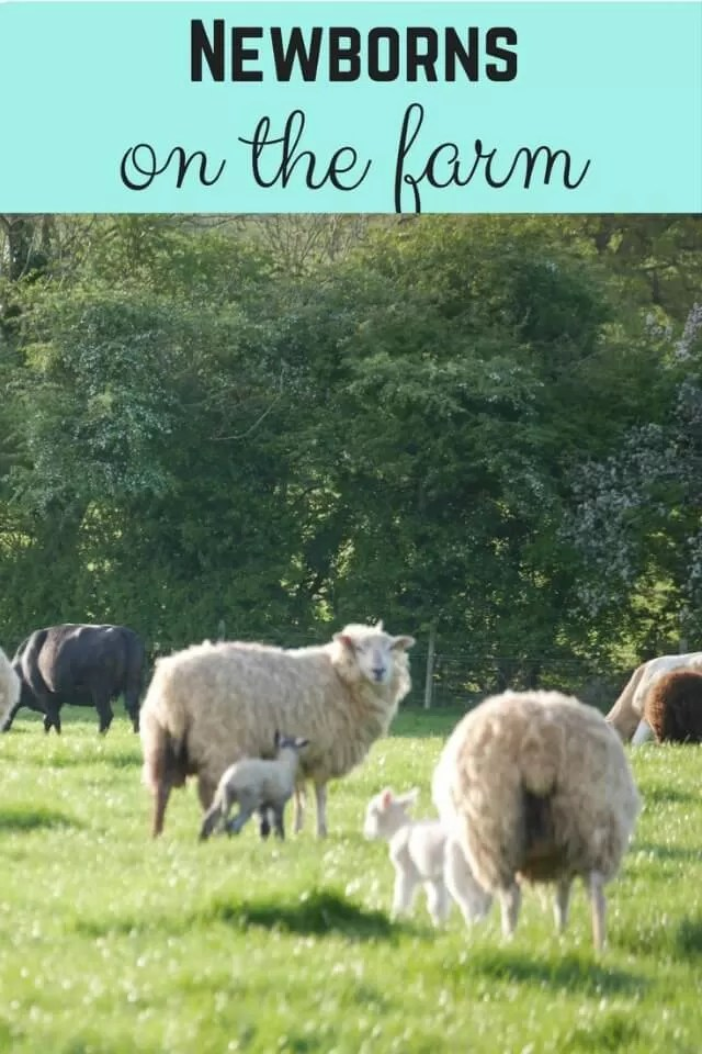 Newborn animals on the farm in spring - Bubbablue and me
