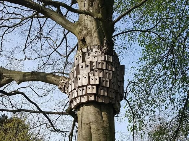 bird boxes at Eaton Park