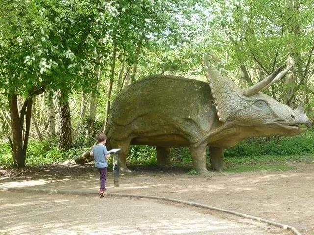 triceratops at dinosaur adventure