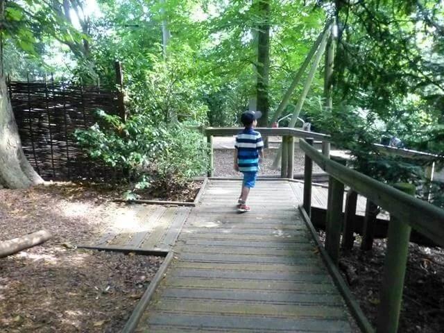 into the woodland playground
