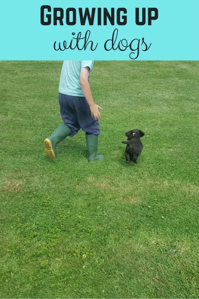Making friends with puppies - Bubbablue and me