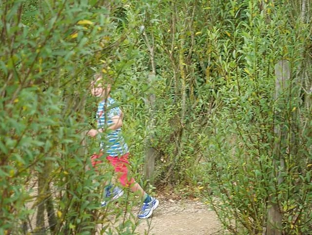 running away through the willows