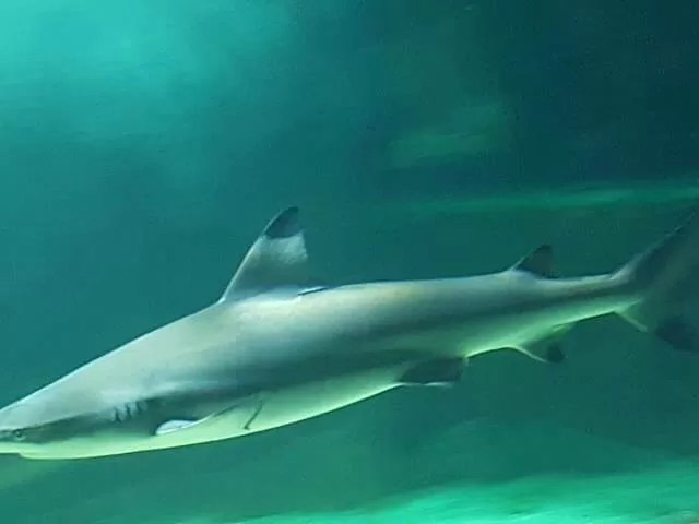 shark at blue reef aquarium