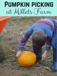 millets farm picking pumpkins