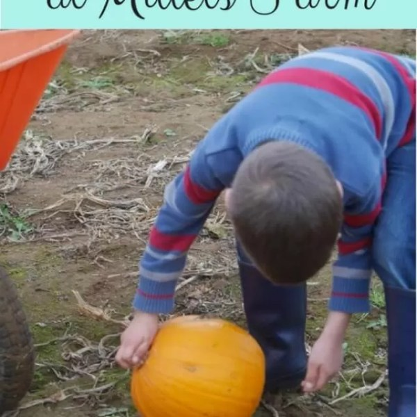 Pick pumpkins to be proud of from Millets Farm PYO