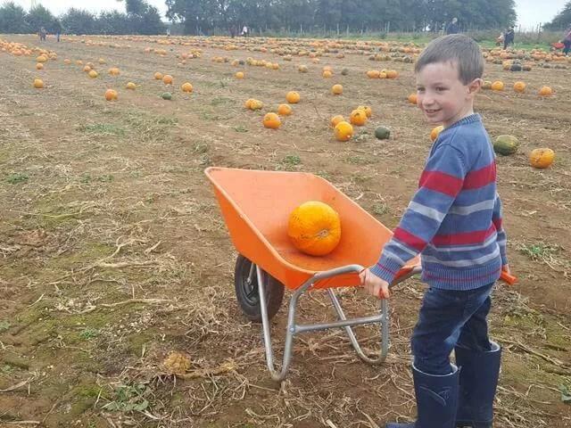 chosen pumpkins in the wheelbarrow