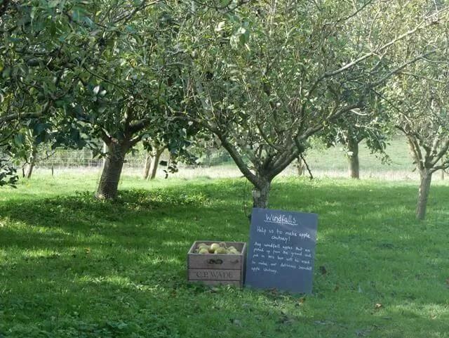 windfalls sign at snowshill manor orchard