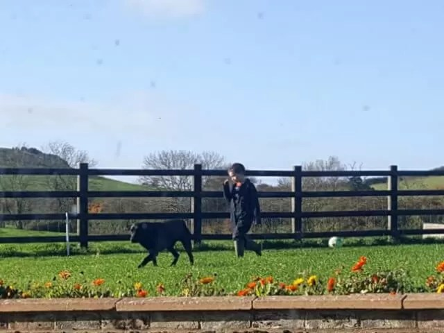 boy and dog walking on the farm
