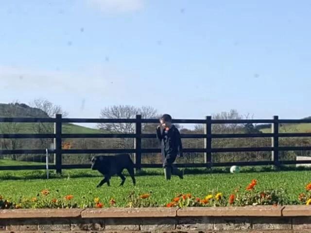 boy and dog walking on the farm