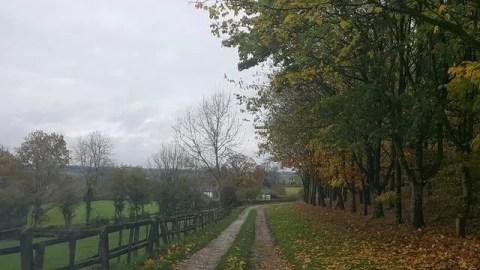 My Sunday Photo – autumn trail