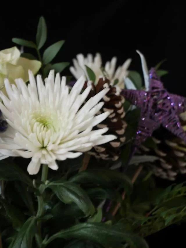chrysanthemums christmas flowers