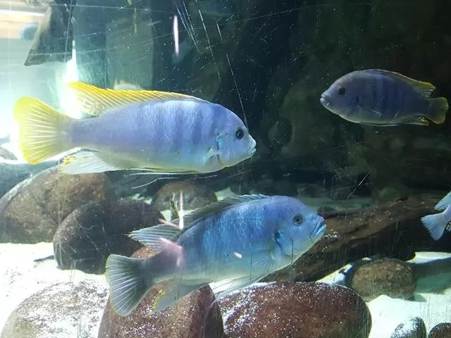 tropical fish at MArwell