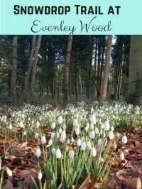 evenley wood garden snowdrops