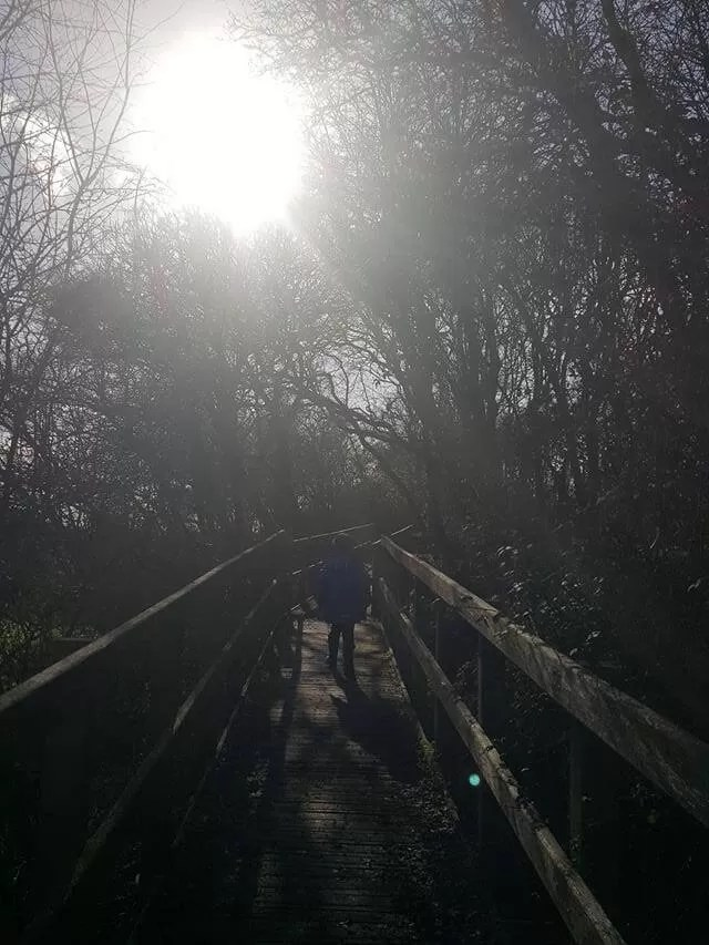 walking the wooden steps in the sun at eberton country park
