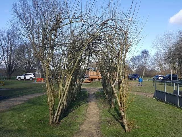 willow tunnel at emerton countrypark