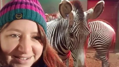 zebra selfie at Whipsnade zoo