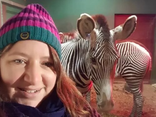 zebra selfie at Whipsnade zoo