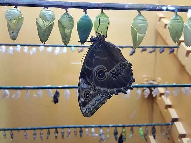 just hatched butterfly