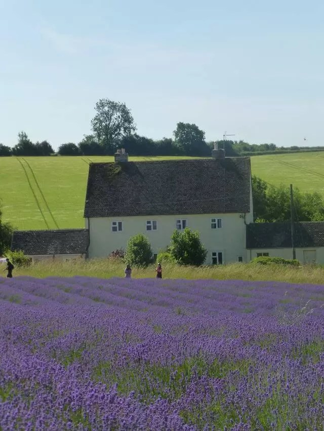 house and lavender