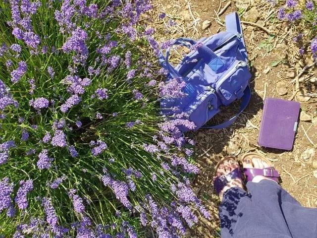 purple lavender arrangement