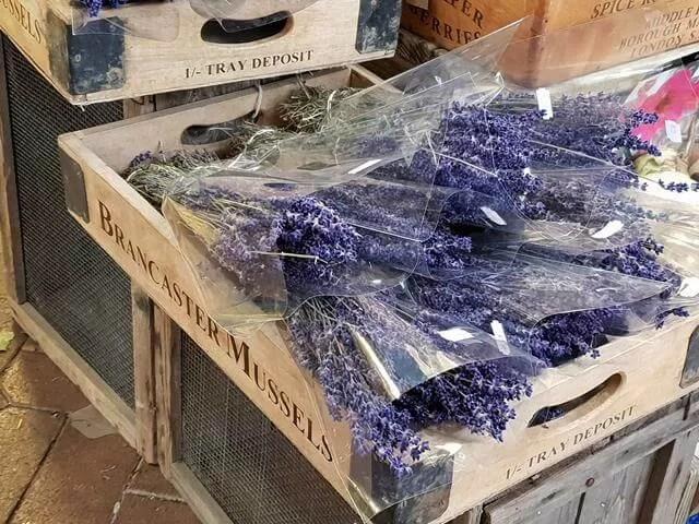 covered market lavender