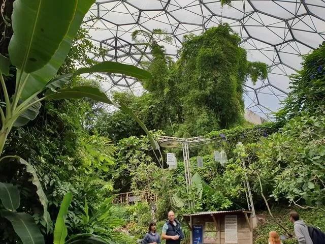 inside rainforest biome