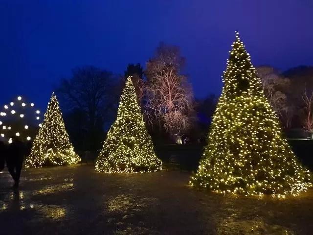 3 lit up christmas trees