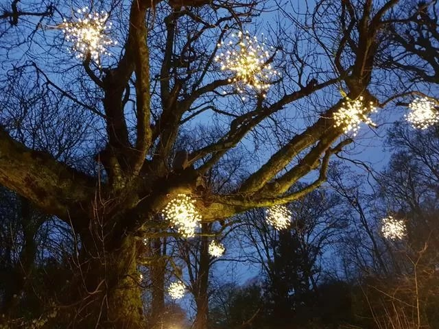 light clusters in trees