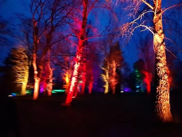 multicoloured lit up trees