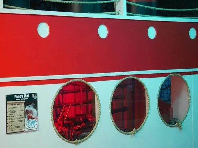 red and white ship portholes